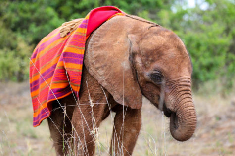 Heritage Adopts an Elephant