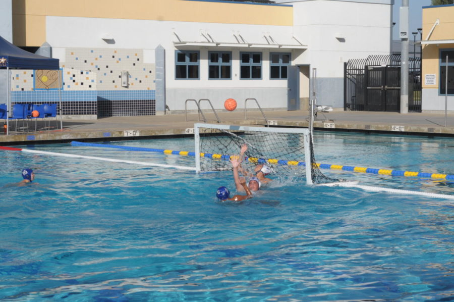 Water Polo Back